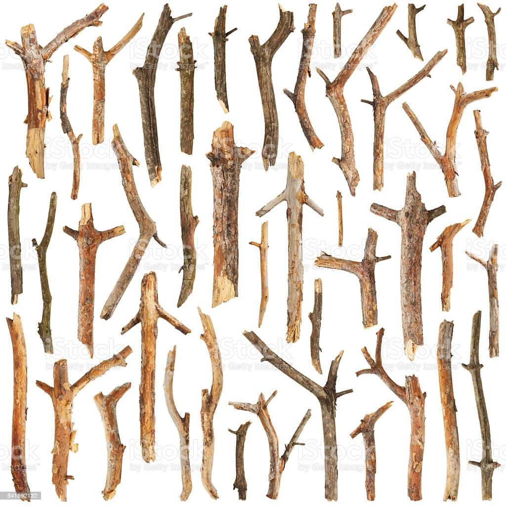 Set of tree branches stock photo