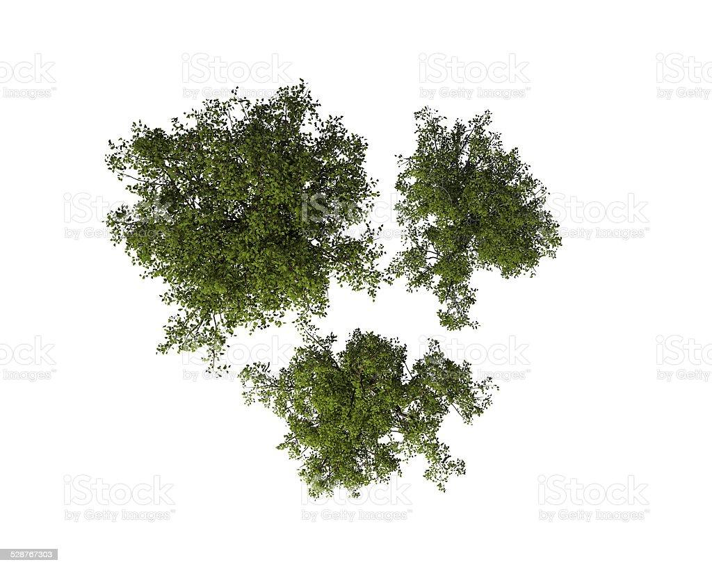 Satz von Bäumen, Ansicht von oben, isoliert – Foto