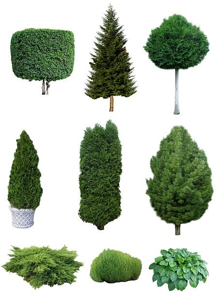 Set of trees and shrubs. stock photo