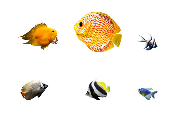 set of tropical fish isolated on white - fish stock pictures, royalty-free photos & images