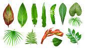 Set of fresh tropical plants isolated on white background. Palm, fern and other leaves