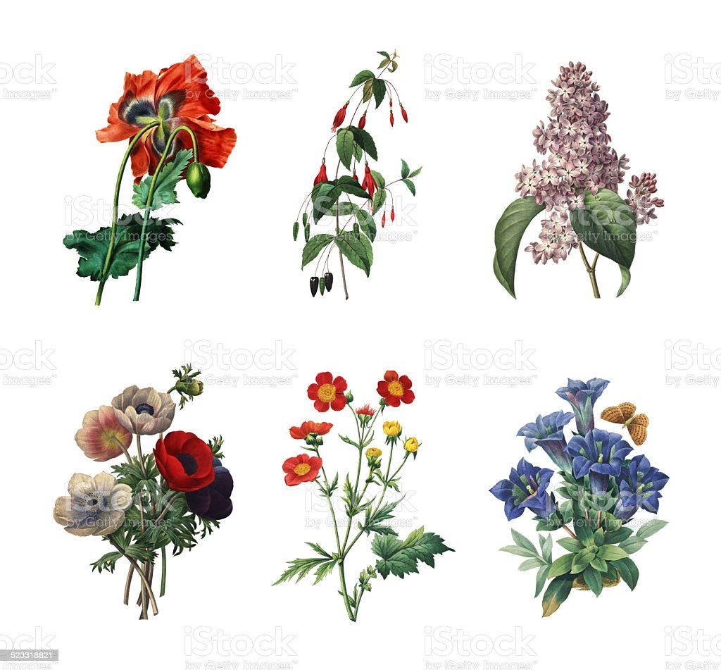 Set of various flowers | Antique Flower Illustrations stock photo