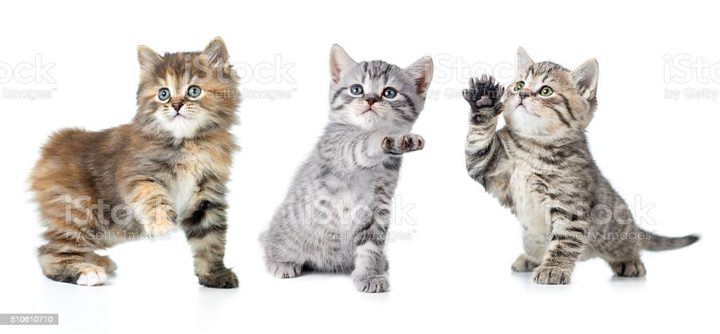 Set of various kittens with paw up isolated stock photo