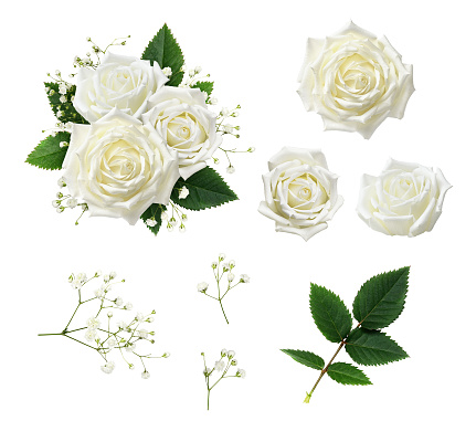 Set of white rose flowers, leaves and gypsophila with example of floral arrangement isolated on white