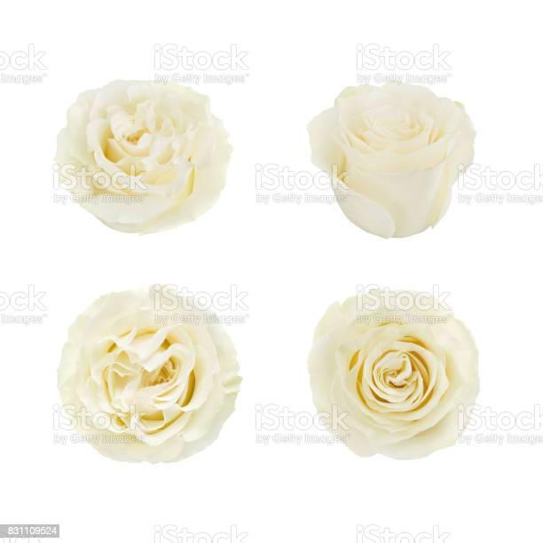 Set of white roses detailed retouch picture id831109524?b=1&k=6&m=831109524&s=612x612&h=1l2jayxg1lphkh9nl1myv2 k7 cn 5wyjpxhndflqlc=