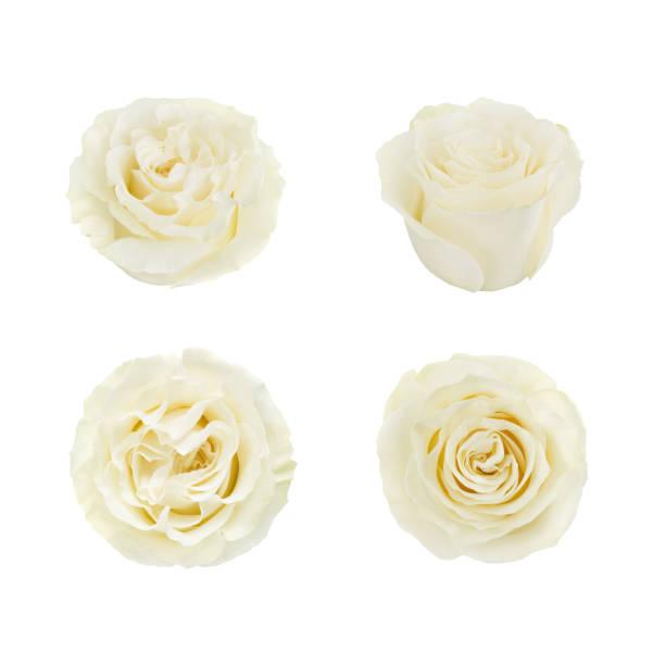 Set of white roses detailed retouch picture id831109524?b=1&k=6&m=831109524&s=612x612&w=0&h=7u8igfewxhu ernxkv8gvt0w0fat0gruzklrpln yi4=