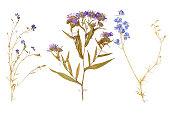の野生の花と葉が、乾燥状態