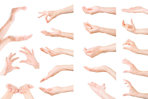 Set of woman hands showing, holding and supporting something. Isolated with clipping path stock photo