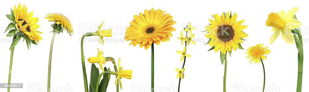 set of yellow flowers stock photo
