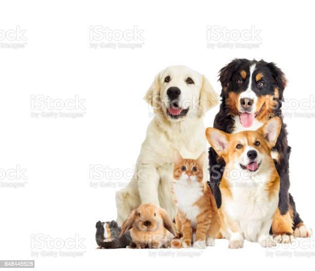 Set pet on a white background picture id648445528?b=1&k=6&m=648445528&s=612x612&h=nvlr5nez3km9lbsa94k8zqqw36gb52ee5zas1zkasnc=