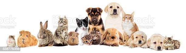 Set pets picture id538776356?b=1&k=6&m=538776356&s=612x612&h=6ygqeew0kqofw13pg4wvafwptlo n4afzfqtctn8kb0=