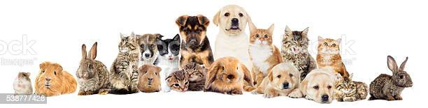 Set pets picture id538777428?b=1&k=6&m=538777428&s=612x612&h=aexqgehd1jloyoj0naaxokuxxan4xdps9u0g3gmywh8=