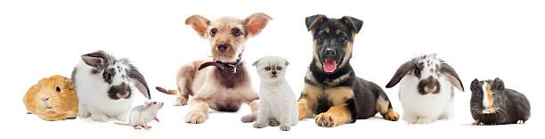 Set pets picture id539258935?b=1&k=6&m=539258935&s=612x612&w=0&h=om6qkjpgiighqlqjoxsagn57juhbeeig0wd1vuukvuq=