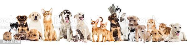 Set pets picture id545462126?b=1&k=6&m=545462126&s=612x612&h=alq2nknph2u8mscs7niz8kirwa1znk6n1z70kr5ko8c=