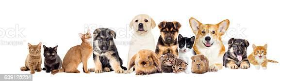 Set pets picture id639125234?b=1&k=6&m=639125234&s=612x612&h=pxypmm0tjveltyazkotb33nbsvqiqprcxjpg8hn  as=