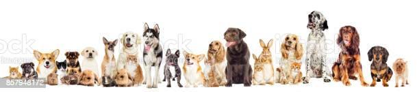 Set pets picture id857948172?b=1&k=6&m=857948172&s=612x612&h=2viyvx vyoyo5urkghogq zkwxafeaccwksxmejdpsk=
