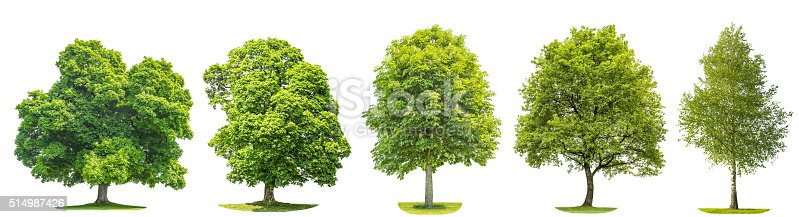 Set of green trees oak, maple, birch, chestnut. Nature objects isolated on white background