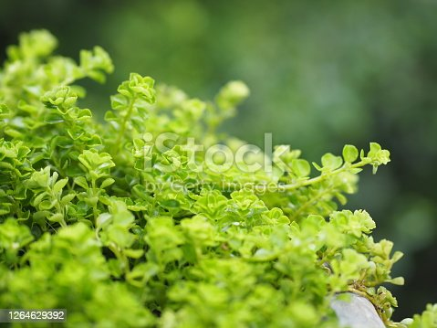 Foliage Small leaves green bush tree texture nature background
