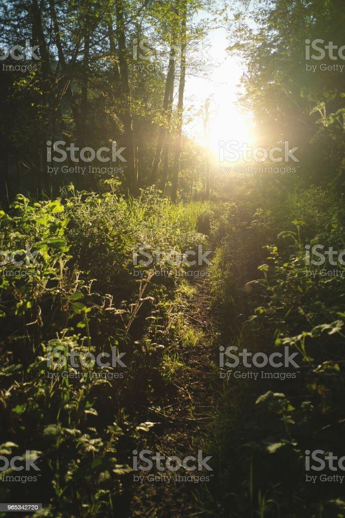 Setting Sun Along Nature Path zbiór zdjęć royalty-free
