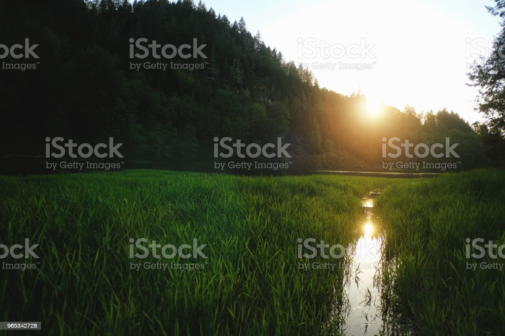 Setting Sun over Marshy lake royalty-free stock photo