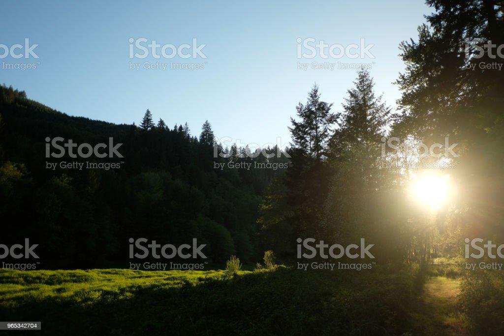 Setting Sun through Trees zbiór zdjęć royalty-free