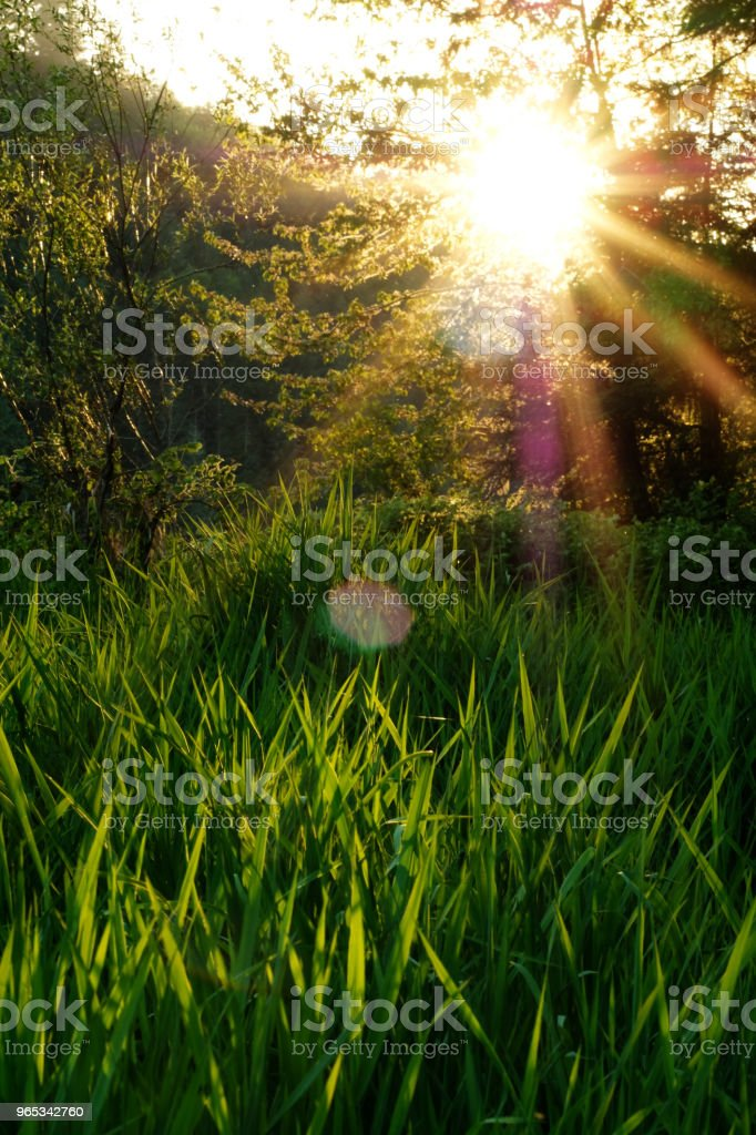 Setting Sun with Tall Grasses royalty-free stock photo