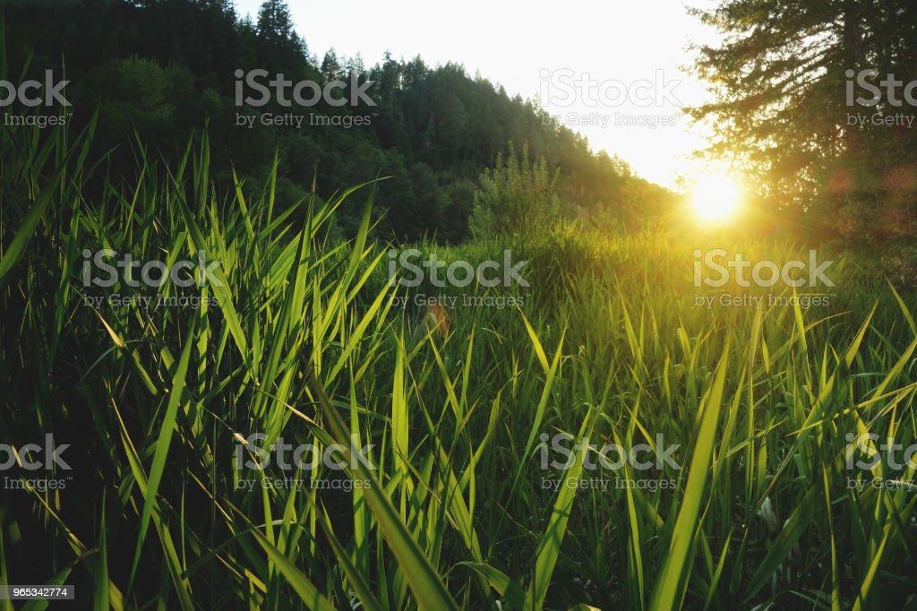 Setting Sun with Tall Grasses zbiór zdjęć royalty-free