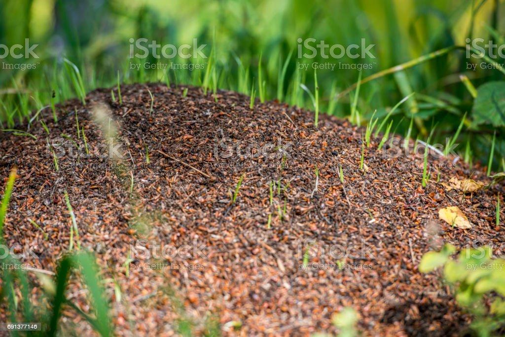 settlement of ants stock photo