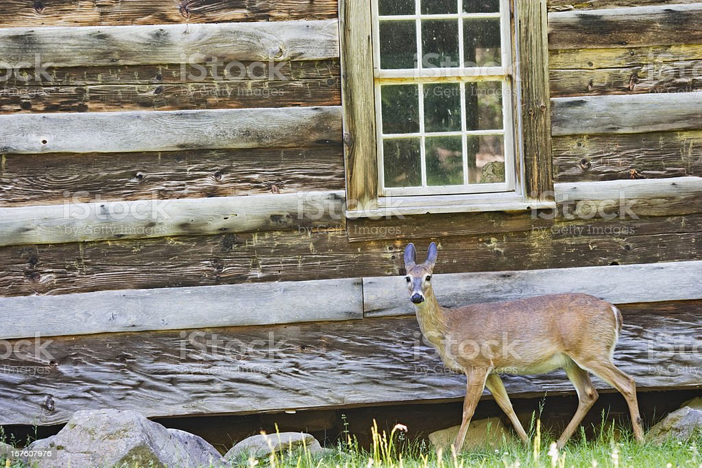 Settlers Cabin with Deer royalty-free stock photo
