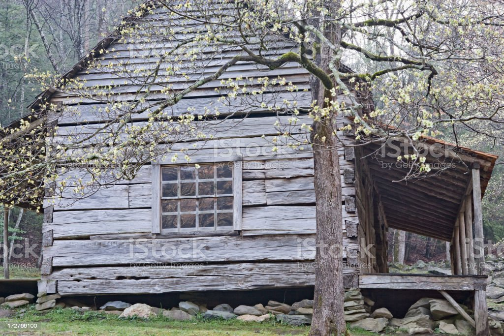 Settlers Cabin with Dogwood stock photo
