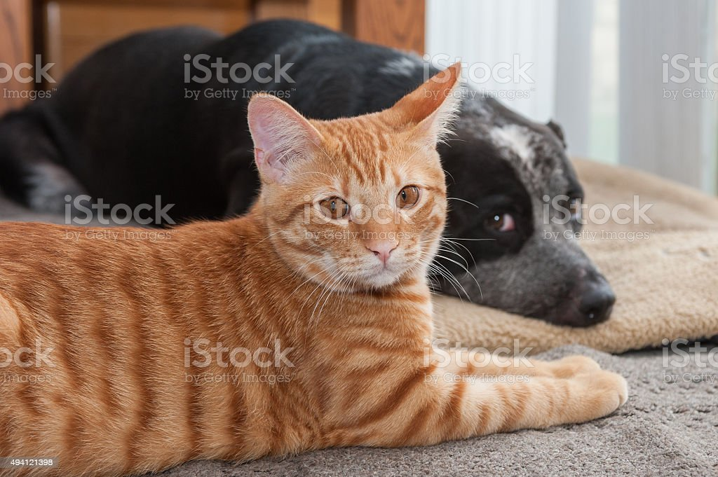 Settling in for a nap stock photo