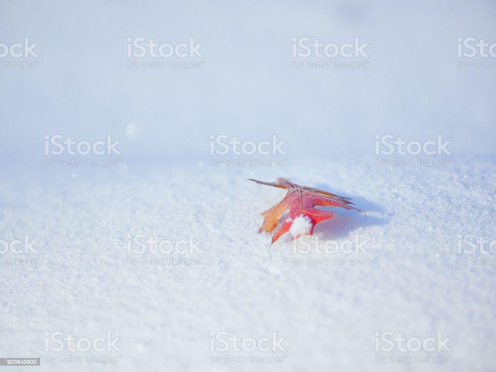 Seule sur la neige - Photo