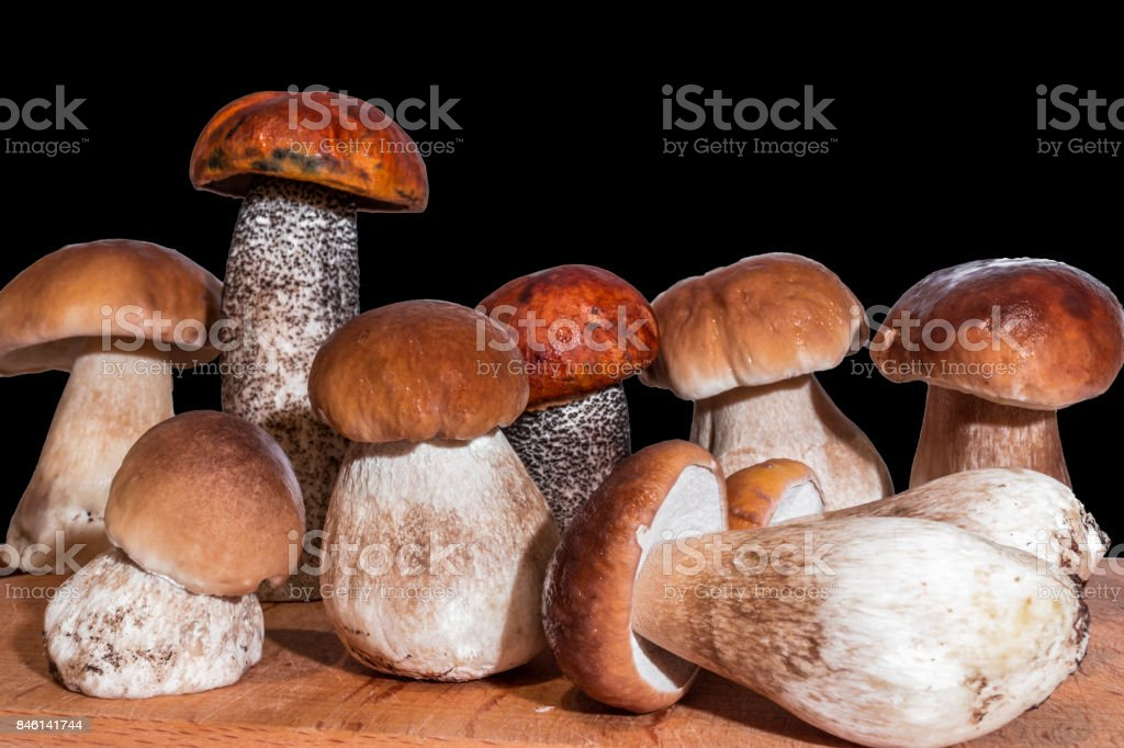 seven mushrooms boletus and two red-capped scaber stalk stand on a wooden board stock photo