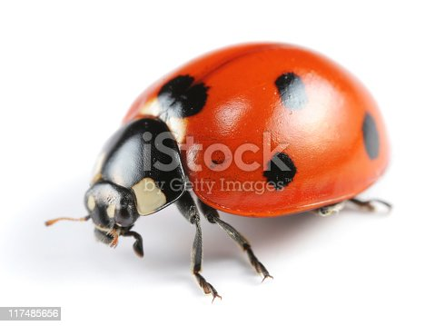 [b]More ladybugs:[/b]  [url=/search/lightbox/5204906][IMG]http://i262.photobucket.com/albums/ii96/arlindo71/l.jpg[/IMG] [/url]  [b]Other insects:[/b]  [url=/search/lightbox/5204894][IMG]http://i262.photobucket.com/albums/ii96/arlindo71/b.jpg[/IMG] [/url][url=/search/lightbox/5204899][IMG]http://i262.photobucket.com/albums/ii96/arlindo71/c.jpg[/IMG] [/url][url=/search/lightbox/5204902][IMG]http://i262.photobucket.com/albums/ii96/arlindo71/a.jpg[/IMG] [/url][url=/search/lightbox/5204920][IMG]http://i262.photobucket.com/albums/ii96/arlindo71/f.jpg[/IMG] [/url][url=/search/lightbox/5204922][IMG]http://i262.photobucket.com/albums/ii96/arlindo71/w.jpg[/IMG] [/url][url=/search/lightbox/5204924][IMG]http://i262.photobucket.com/albums/ii96/arlindo71/bt.jpg[/IMG] [/url][url=/search/lightbox/5204928][IMG]http://i262.photobucket.com/albums/ii96/arlindo71/m.jpg[/IMG] [/url][url=/search/lightbox/5204929][IMG]http://i262.photobucket.com/albums/ii96/arlindo71/s.jpg[/IMG] [/url][url=/search/lightbox/5204931][IMG]http://i262.photobucket.com/albums/ii96/arlindo71/bl.jpg[/IMG] [/url][url=/search/lightbox/5204933][IMG]http://i262.photobucket.com/albums/ii96/arlindo71/h.jpg[/IMG] [/url][url=/search/lightbox/5205060][IMG]http://i262.photobucket.com/albums/ii96/arlindo71/Insects.jpg[/IMG][/url]