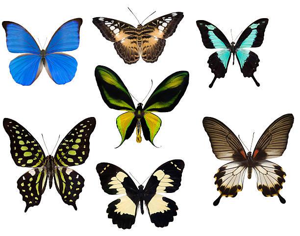 Seven tropical butterflies picture id146954241?b=1&k=6&m=146954241&s=612x612&w=0&h=gw5xfrefswlrx01wkx8rrq3kix3bf7o2hz1bvmpvnso=
