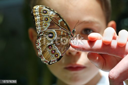 7 year old boy, looking at a live butterfly that sits on his father´s finger. Focus is on the butterfly. - Please see also our other butterfly images: