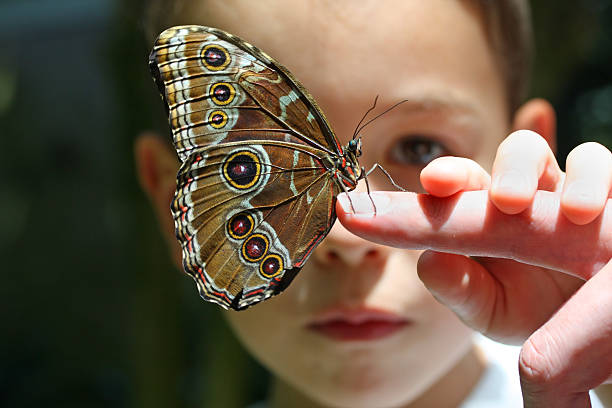 Seven year old boychild with butterfly on finger picture id157376283?b=1&k=6&m=157376283&s=612x612&w=0&h=78sf67x9dhjal3lhhykvimtogo4porhiozv2xvhay6k=
