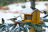 Several birds eating from a feeder on a snow-covered pine