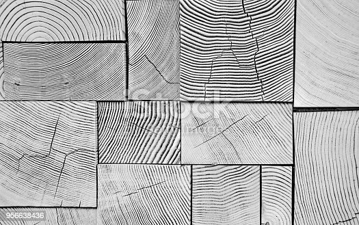 Several conifer wood ends stacked together  backgroundin black and white