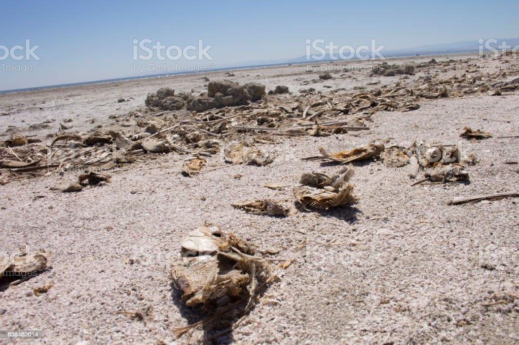 Bombay Beach Salton Sea History