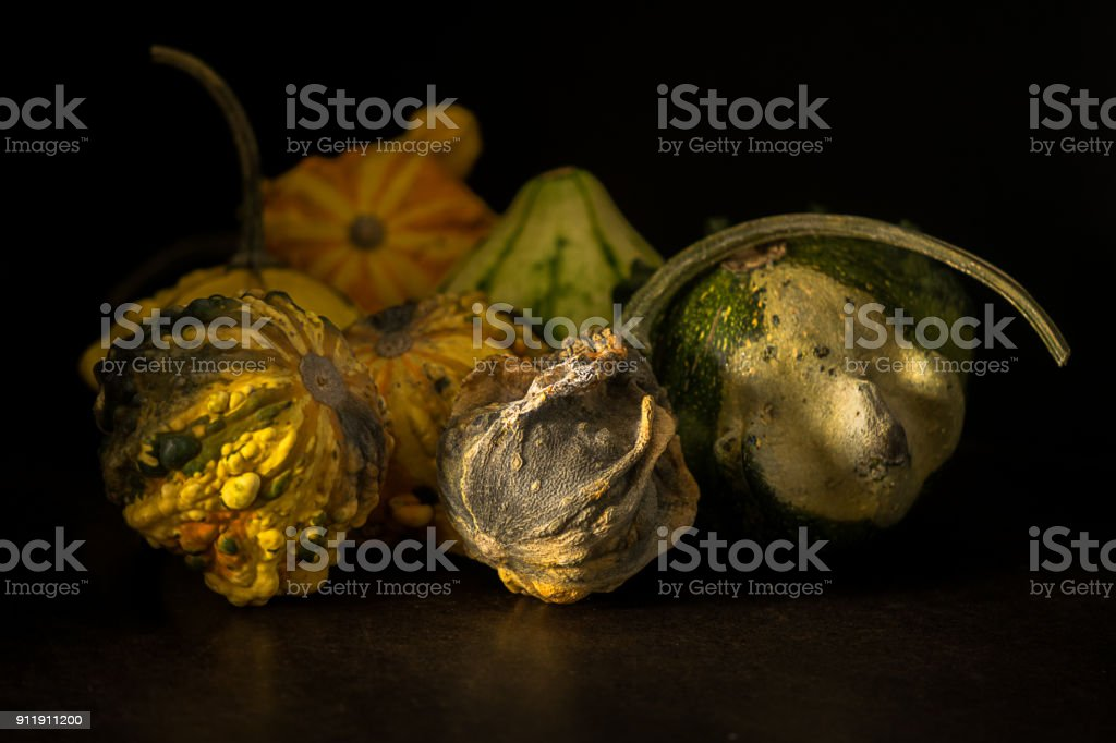 Several decaying gourds stock photo