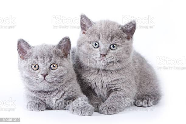 Several kittens lying and looking at the camera picture id520551022?b=1&k=6&m=520551022&s=612x612&h=uarnoz7n 04okjf0gxfqgypjbibzhhj 9 bn6yh3ftq=