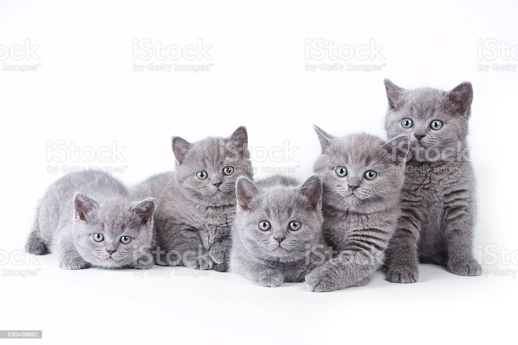Several kittens lying and looking at the camera stock photo