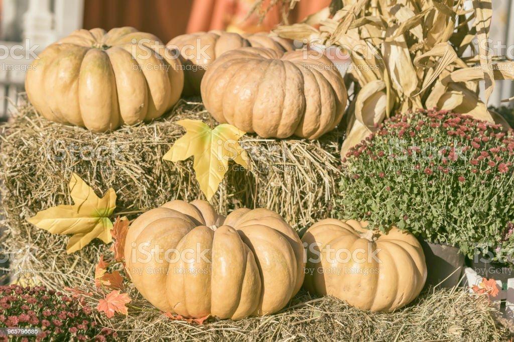 Verschillende grote organische pompoenen op droog stro, herfst bladeren en bloemen. Oogst de achtergrond. Symbool van vakantie, met name op Thanksgiving Day - Royalty-free Archiefbeelden Stockfoto