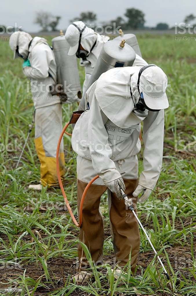 Several men in white hazmat suits, spraying pesticides royalty-free stock photo