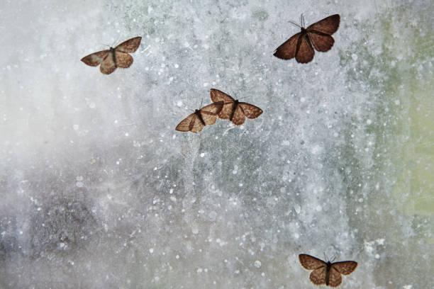 mehrere motten sitzen auf einem schmutzigen fenster, insekten sind gefangen. kreativer hintergrund. - mottenfalle stock-fotos und bilder