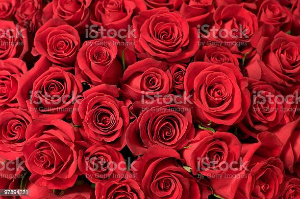 Several red roses wallpaper background picture id97894221?b=1&k=6&m=97894221&s=612x612&h=hyrfkrlbgp9aeuxs0odxxpgenscdbnl4fzxlvgegfr0=