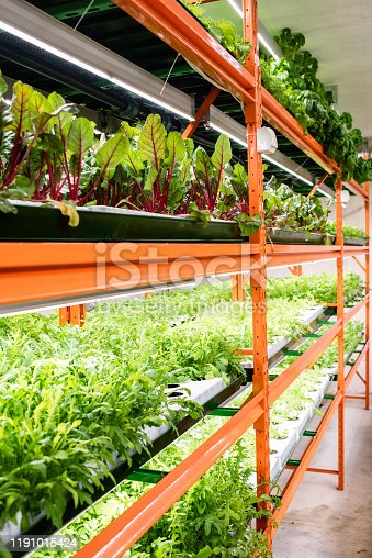 Several shelves with fresh green seedlings of various kinds of vegetables growing inside greenhouse