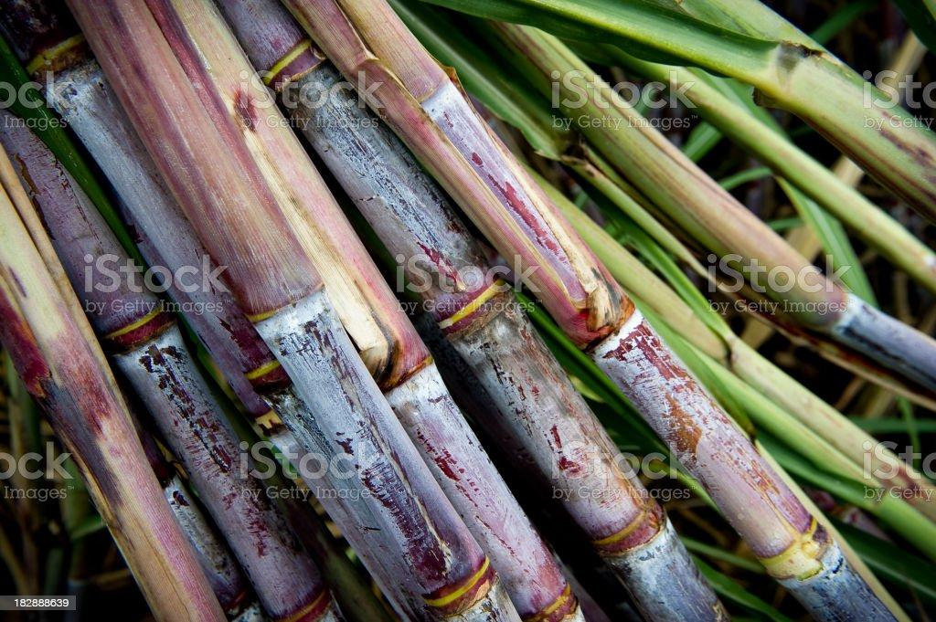 Several sticks of fresh sugar cane royalty-free stock photo