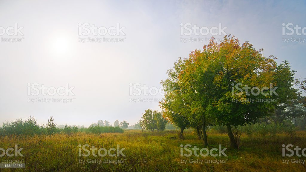 Several trees in field at misty sunrise Several deciduous yellow and green trees in field at autumn misty sunrise. Agricultural Field Stock Photo